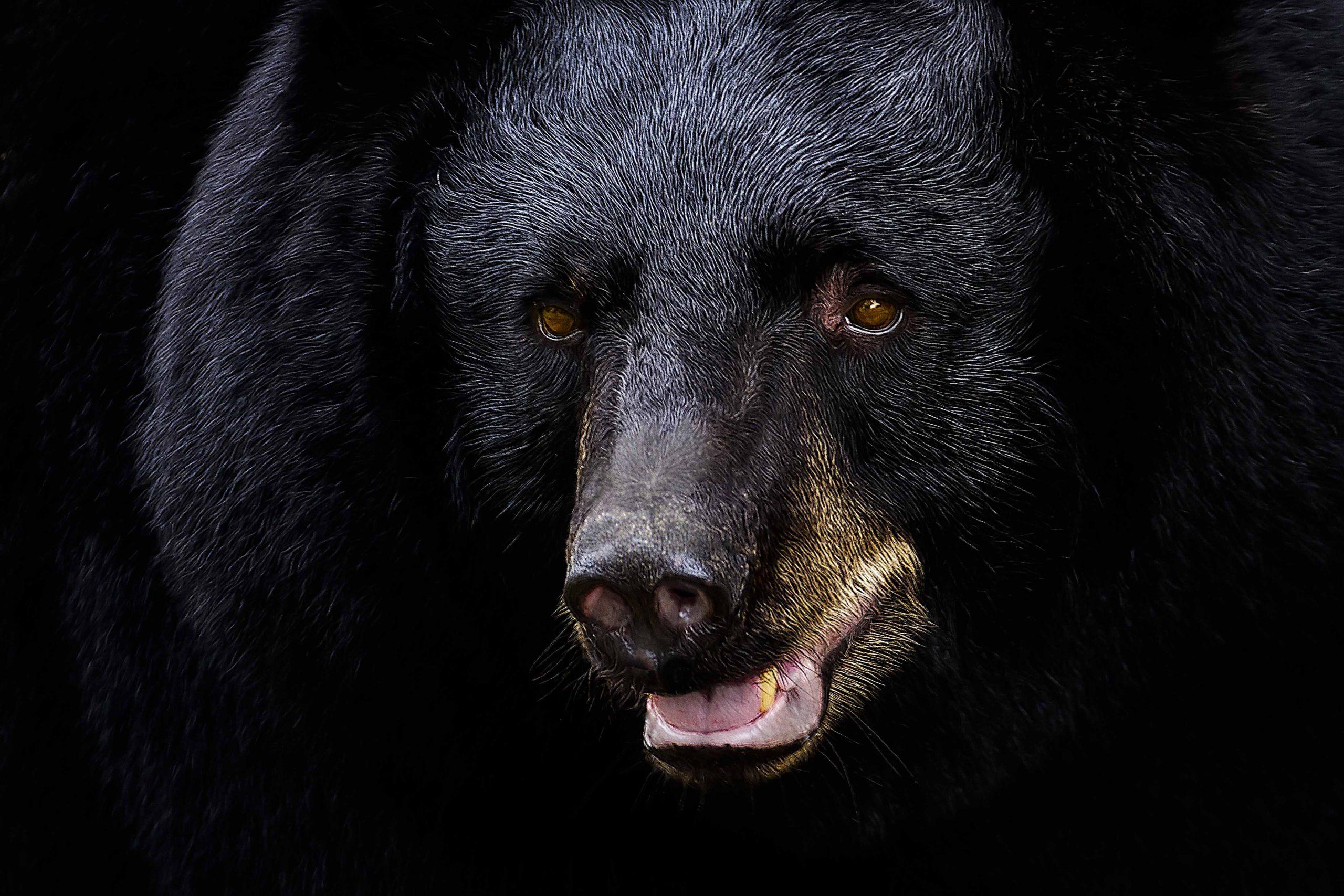 Creature Feature: Florida Black Bear