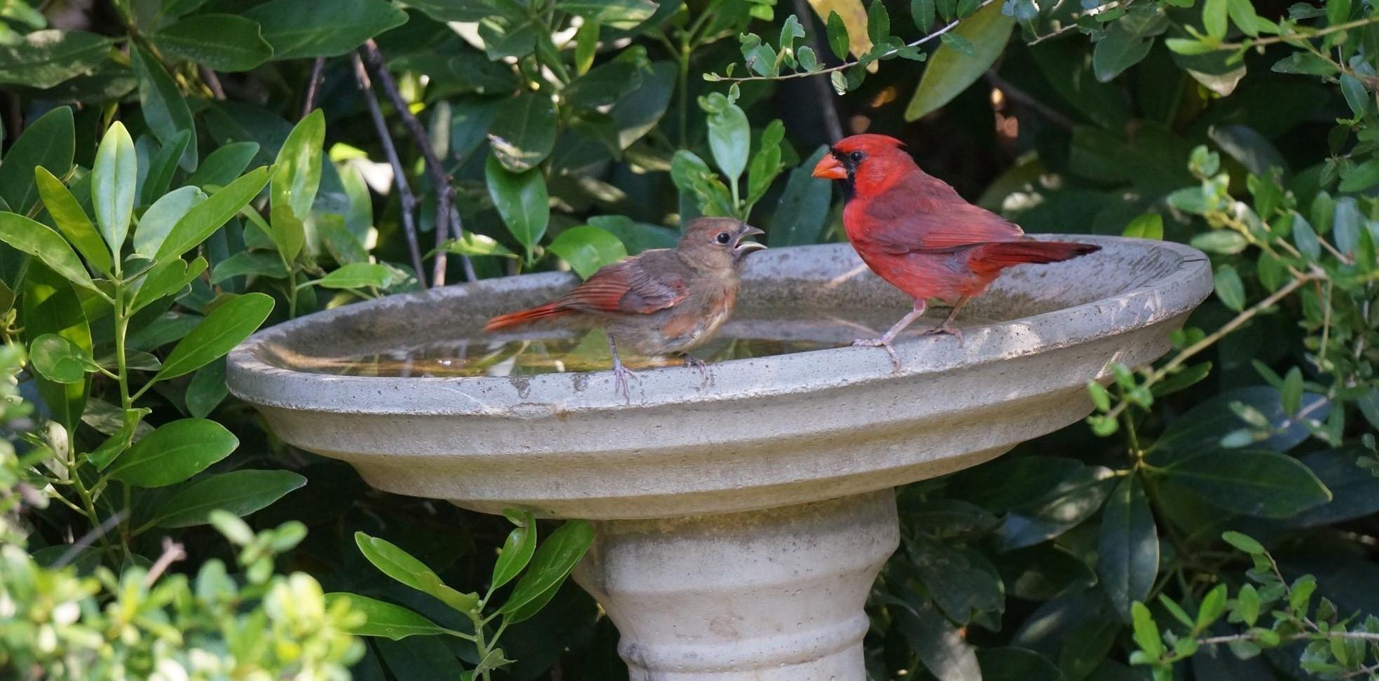 Backyard Birdbaths