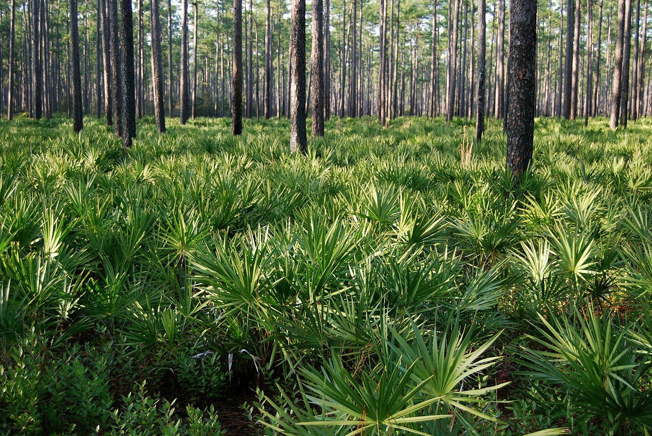 FWF Forest Advocate To Assist Landowners With Longleaf