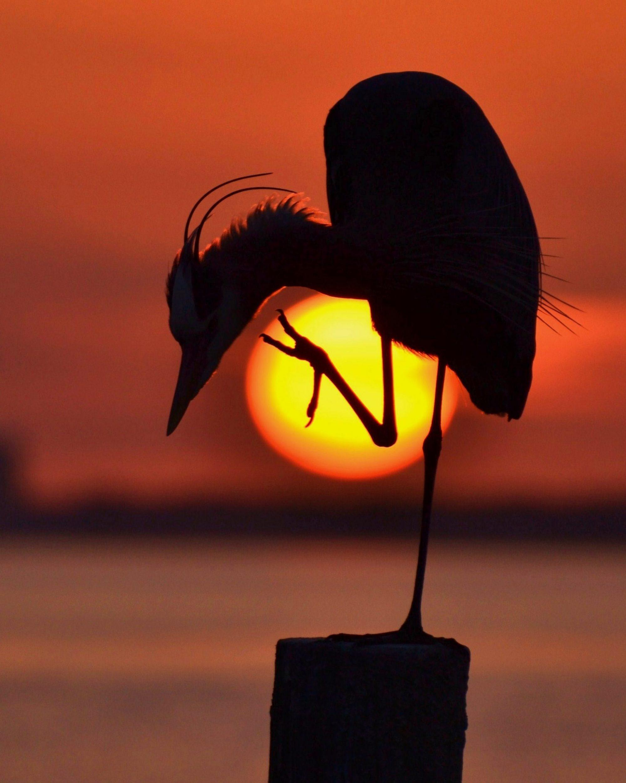 Sunset and Sunrise Winner 2015