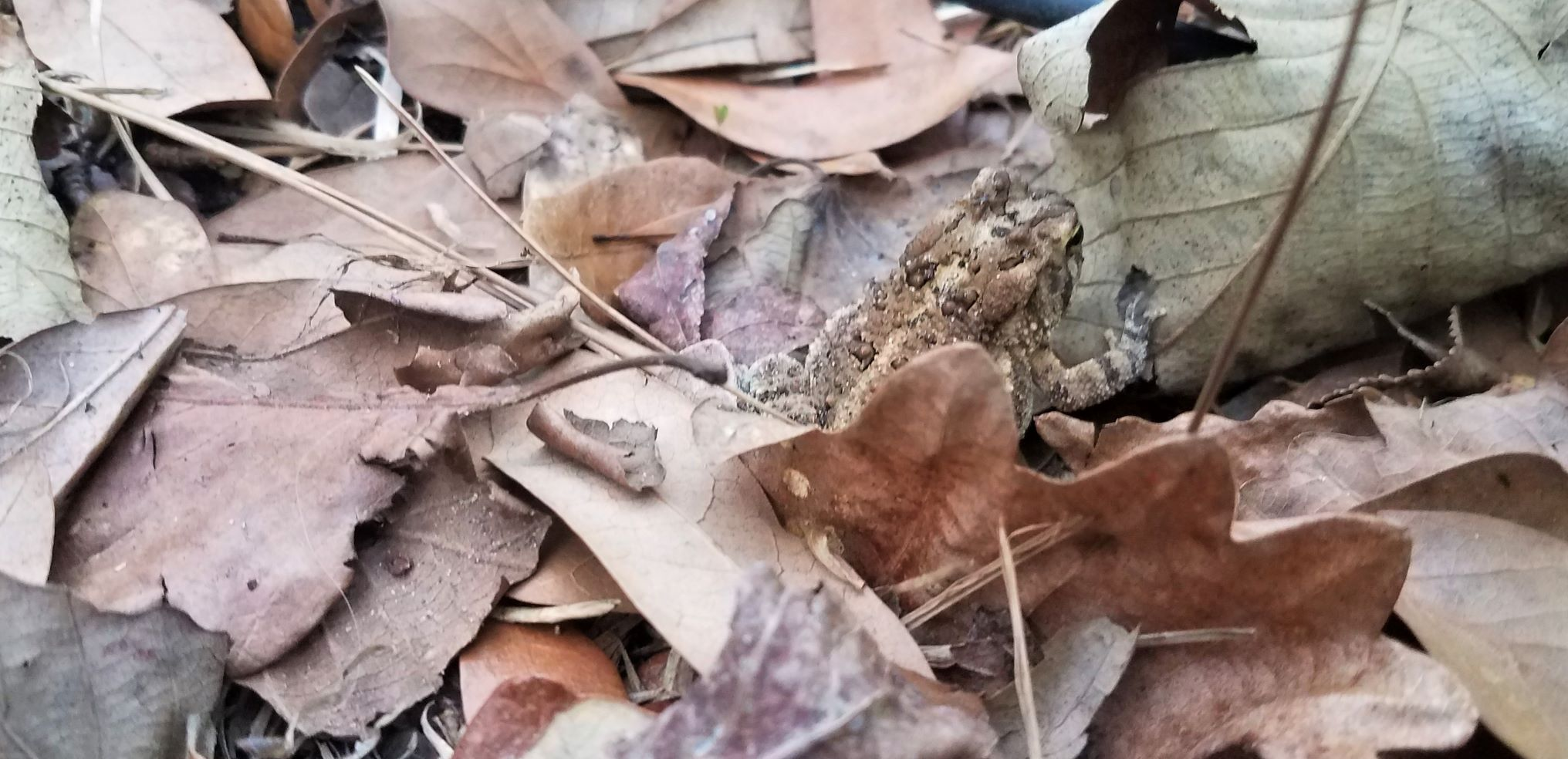 Critters in the Leaf Litter