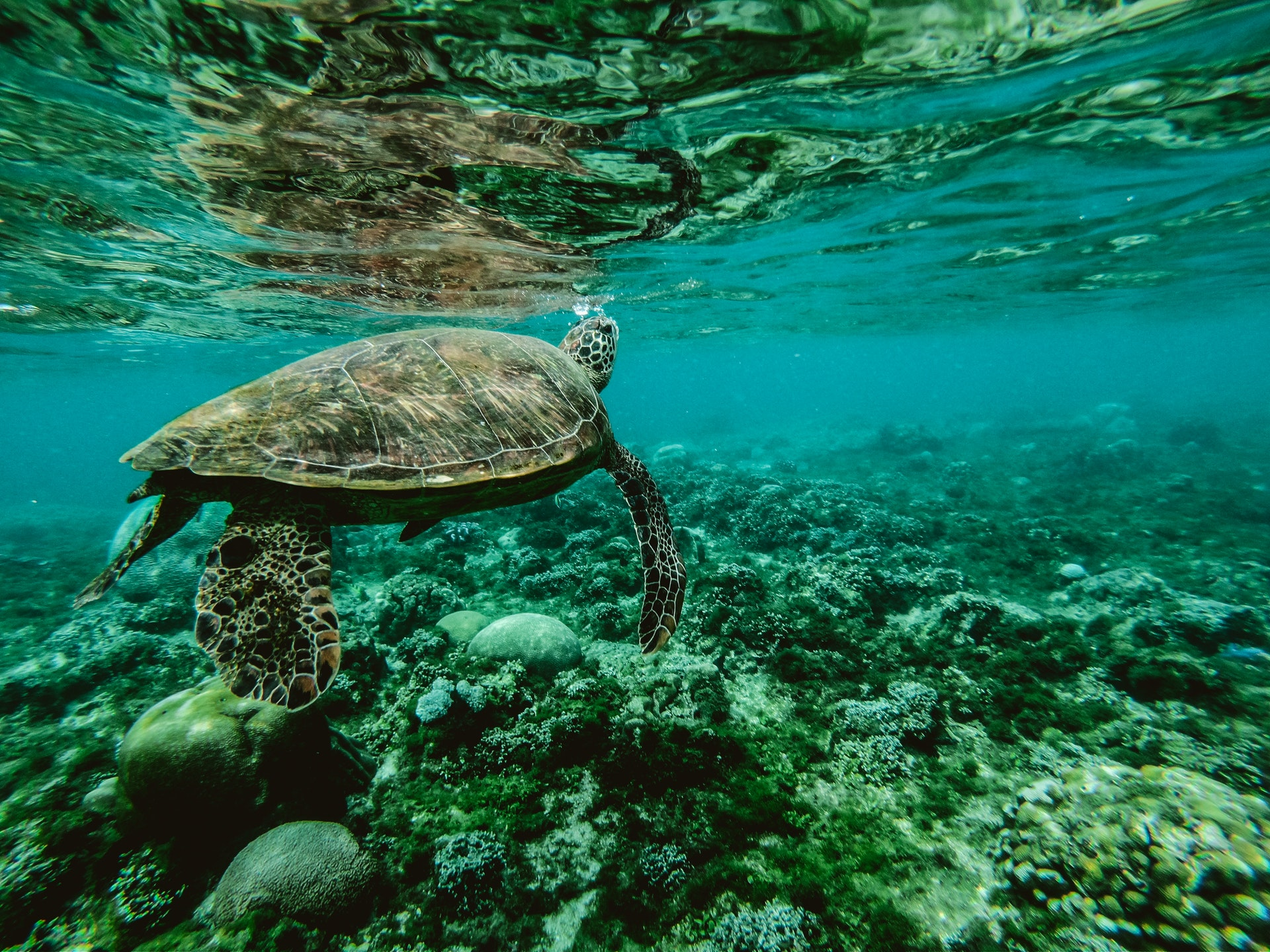 Coral Reefs: Canaries in the Coal Mine for Climate Change