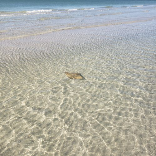 Clear Day Sting Ray by Aimee Graeber