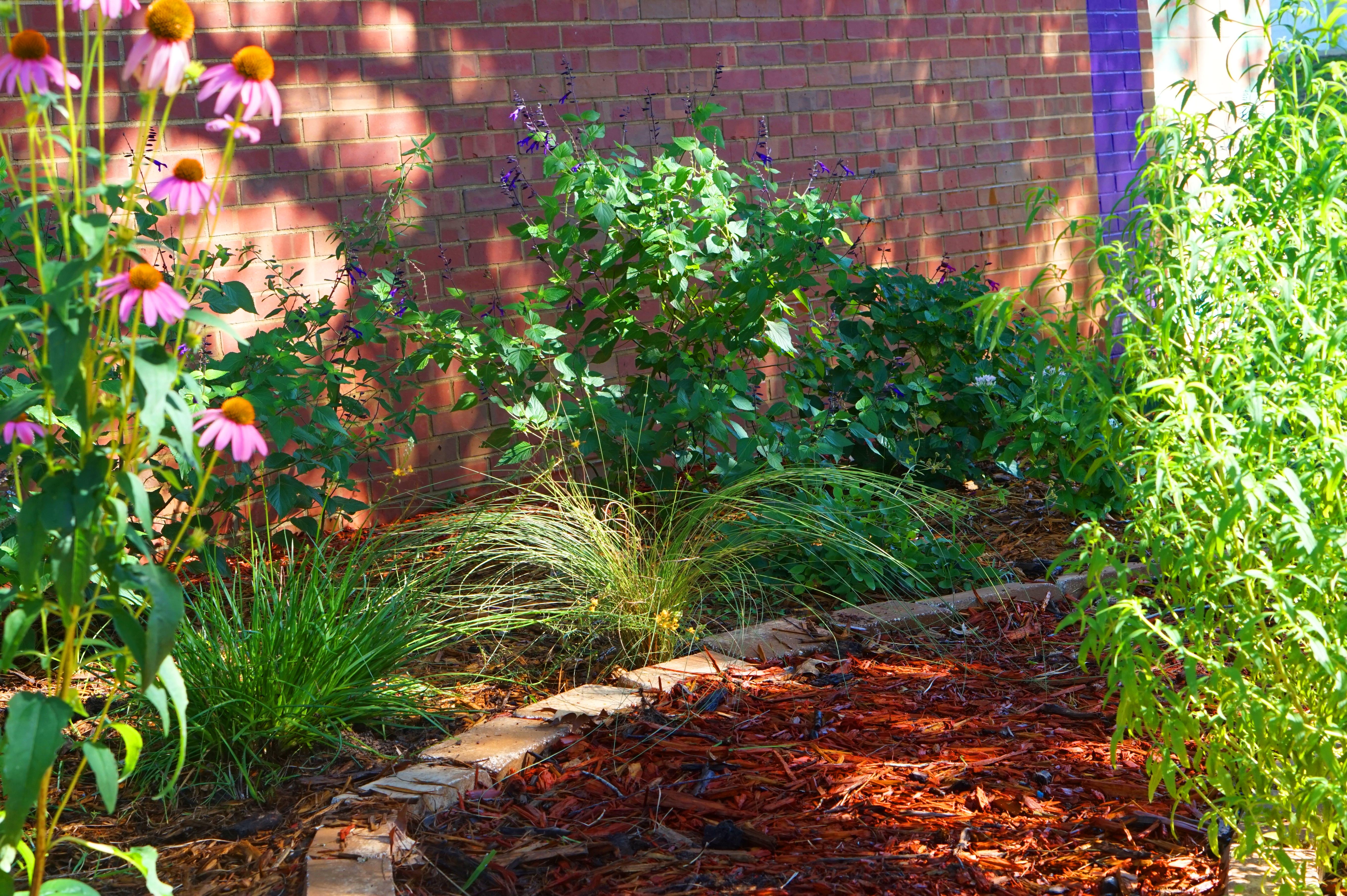 Gardening for a Wildlife Habitat